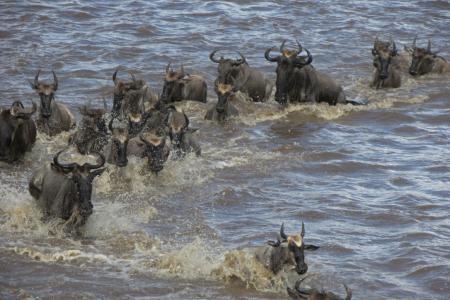 Mara River crossings in the north