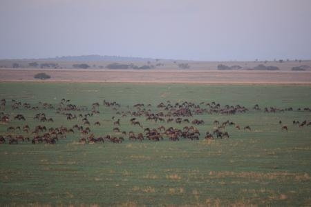 Flying over the wildebeest migration