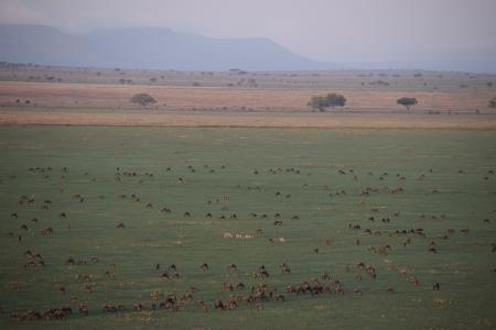 Wildebeest on the Serengeti's southern plains