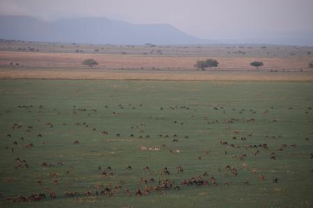 Wildebeest on the Serengeti's southern plains