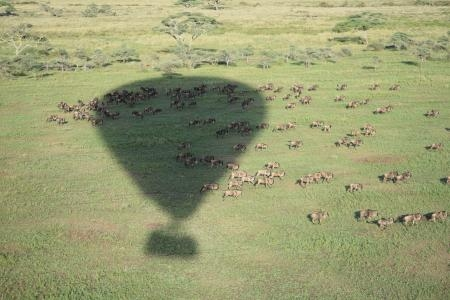 Hot air ballooning over the migration