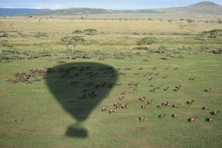 Viewing the migration from above