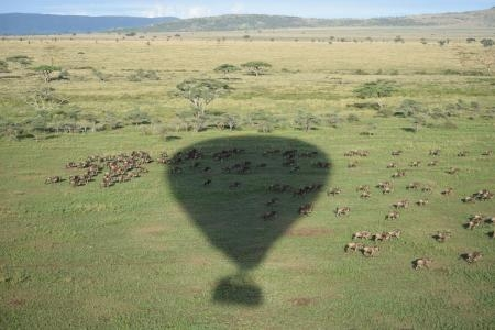 Aerial view of the wildebeest migration
