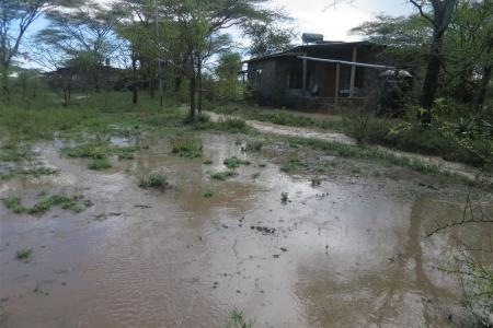 The rain has continued to fall in the southern Serengeti