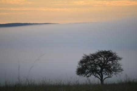 Mist in the Mara Reserve