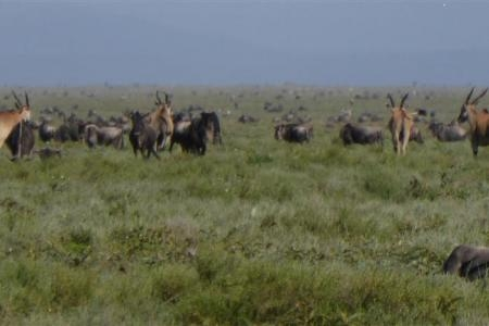 The majority of the herds are in Makao and Kusini