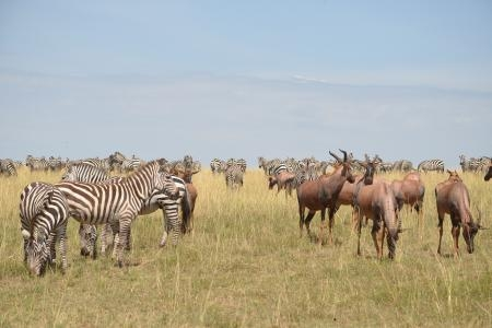 The resident herds in the Olare Orok Conservancy