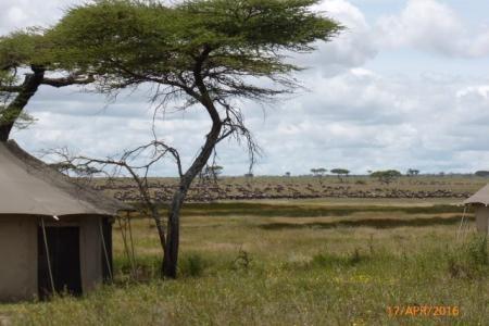 The wildebeest migration outside Namiri Plains