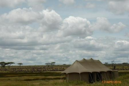 The great migration is close to Namiri Plains