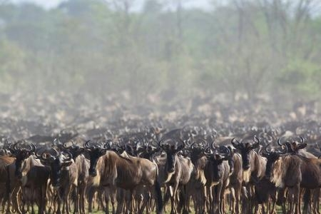 The first herds have arrived at the Sand River border