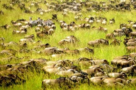 The migration close to Sala's Camp