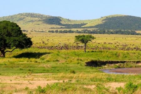 Large herds close to Sala's Camp
