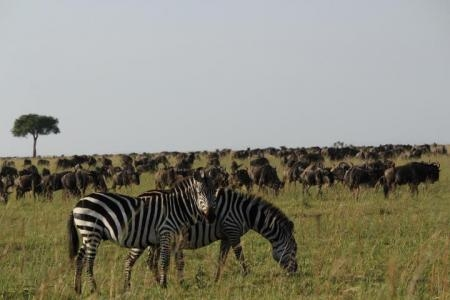 The first wildebeest spotted at Look Out Hill