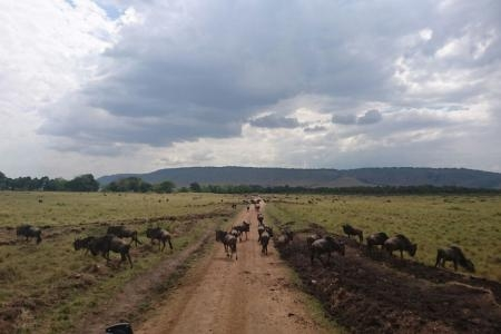 Herds in the northern Mara Triangle