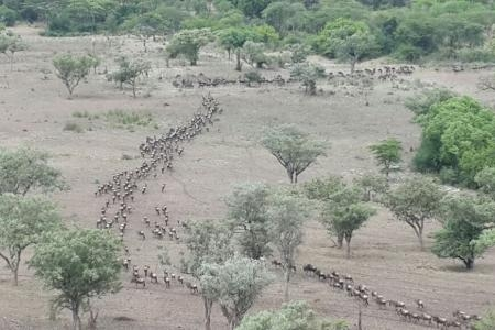 Migration close to Mbalageti