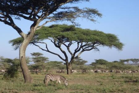 The migration in Ndutu