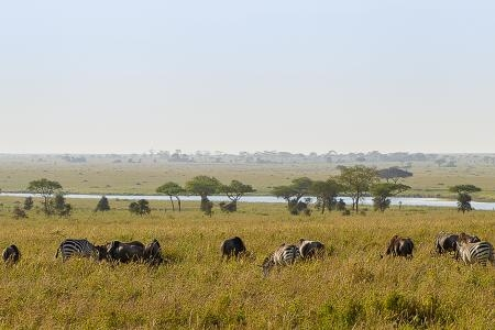 Wildebeest and zebra around Lake Magadi
