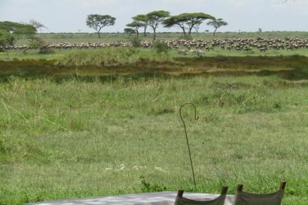 The herds have returned to Namiri Plains Camp