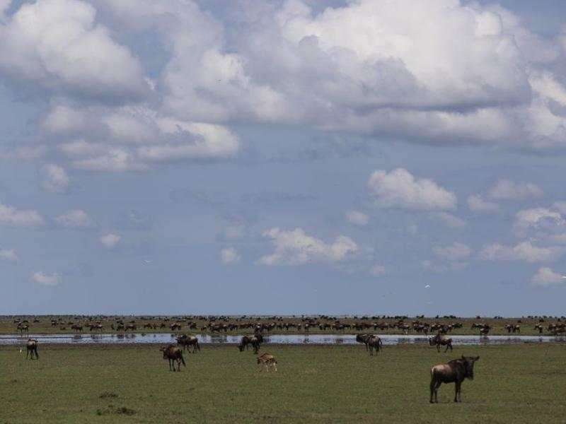 great migration safari alex walker's serian kakesio plains