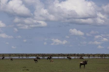 great migration safari alex walker's serian kakesio plains